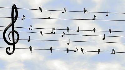 Steirische Harmonika lernen Notenschlüssel Vögel